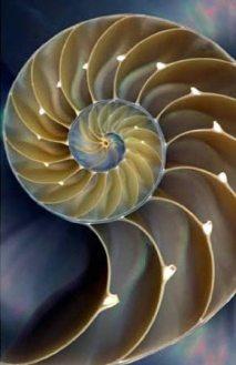 Spiral nautilus shell