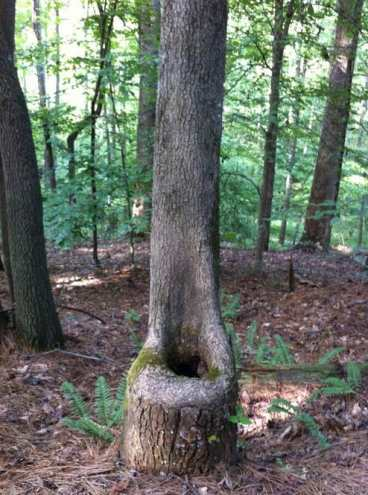 "Adds new meaning to ""I'll go in the woods."""