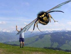 Bee bomb!