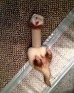 funny-animal-fails-11-586a7340edd20__605