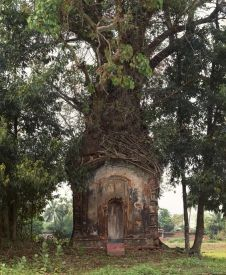 Banyan tree temple (photo by Laura McPhee)