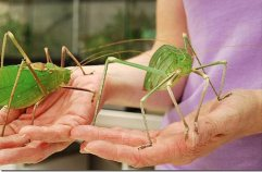 BOGO Katydids on sale ths week only!