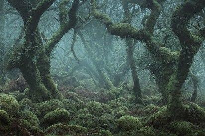 Dartmoor Forest, England