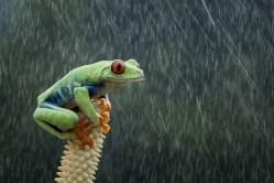 I take to rain like, well, like a frog takes to water
