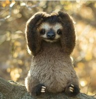 I'm full of slothlove