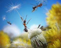 Ant aviators