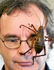 The real Jiminy: Wetas are the world's largest crickets.