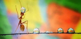Raymondo Ant: Water Juggler Extraordinaire!