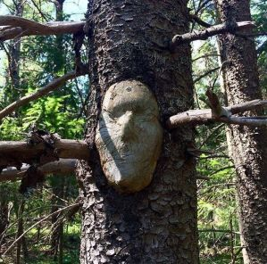 A Face in the Forest