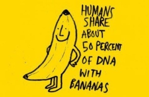 Also, bananas are terrified of slipping on humans!