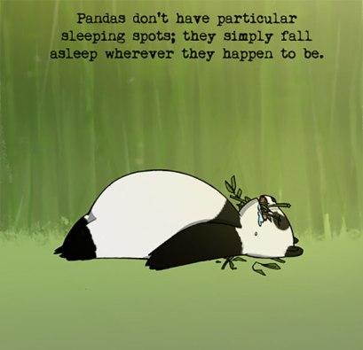 I always suspected I was part Panda!