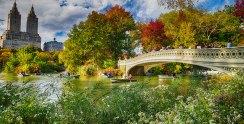 Central Park, New York City (a favorite proposal site)