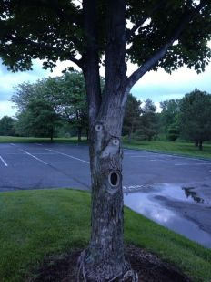 Picasso Tree 1