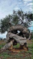 Wrestling Trees