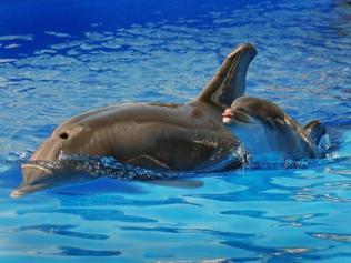 Swim with your mom.
