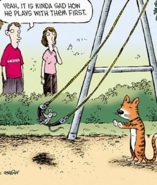 Cat altruism is frequently misinterpreted.