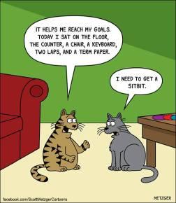 Cat fitness.