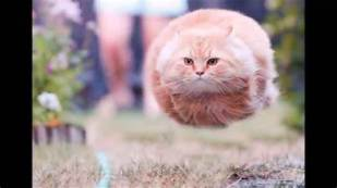 Cats are the original lighter-than-air vehicles.