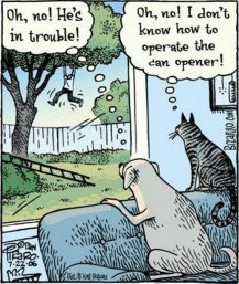 Dogs and cats do not observe the same code of ethics (Part One).