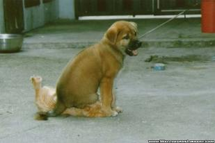 Dogs are actually very comfortable around cats.