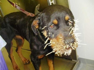 Dogs are not skilled at using toothpicks.