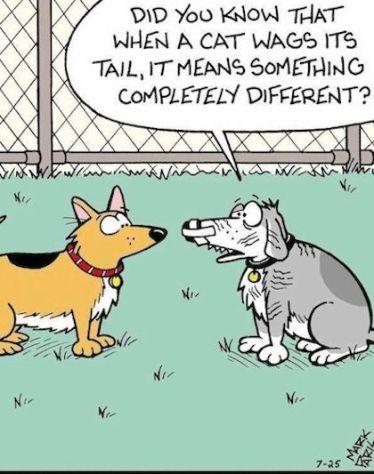 Dogs do not speak fluent Cat.