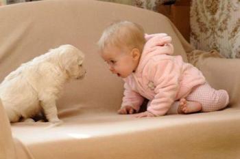 Hey, puppies is puppies.