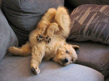 Favorite yoga pose: the Downwrd Dog.