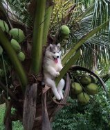 Island dogs are not like city dogs.