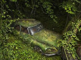 Automobile-Reclaimed-by-Nature