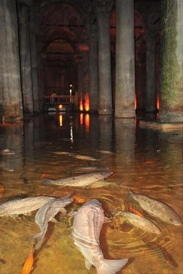 Basilica cistern (Oguz Kosebalaban )