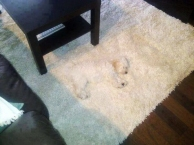 camouflage-animals-pets-funny-36__605