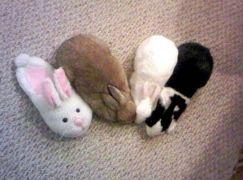 rabbit-camouflage