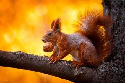 A large percentage of the world's trees were planted by squirrels who forgot where they put their acorns.