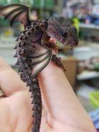 Dragon pup