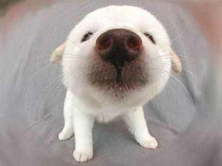 Each dog's noseprint, just like human fingerprints, is unique.