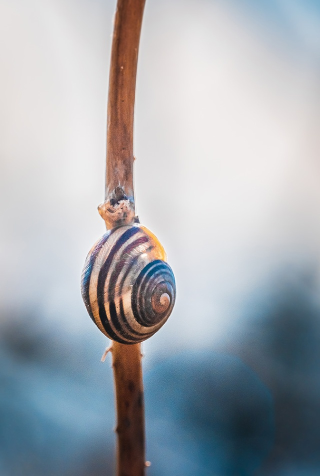 Hang Tight, Snail Photograph By Stephen Geisel, Love-fi