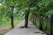 Non-conformist trees.