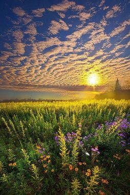 Photo by Phil Koch