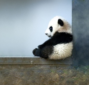 "The punishment for killing a panda in China is death (""Well, duh!"")."