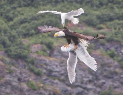 A seagull's last-ditch effort to save a friend (we all need a little help from time to time).