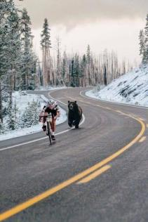 Setting a new cyclist (and bear) speed record