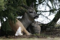 Bambi and Thumper chillin'