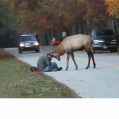 Buck up, buddy