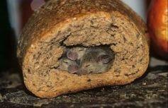 In-bread mice