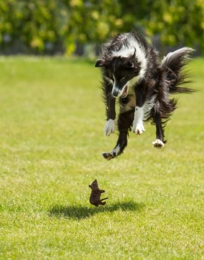 Interspecies play