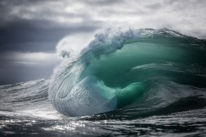 Teal (photo by Warren Keelan)
