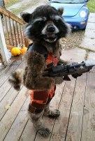 Rocket Racoon Kid