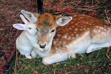Sharing secrets - 'Spread the word, Bambi--we break outa the petting zoo tonight'