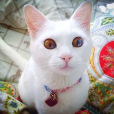 Agate eyes